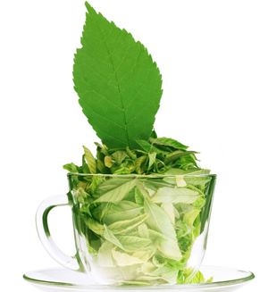 What are the benefits of Green Tea extract?